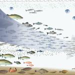 Halibut Fishing Season – Big Catch In Alaska